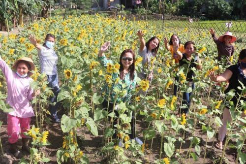 Manalansan Sunflower Farm, Hermosa, Bataan